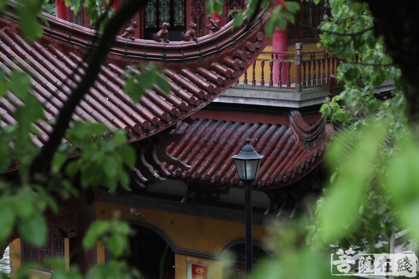 护国寺环境清幽(图片来源:菩萨在线 摄影:妙文)