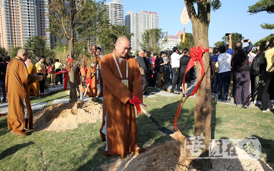怀梵法师为罗汉松培土(图片来源:菩萨在线 摄影:妙雨)
