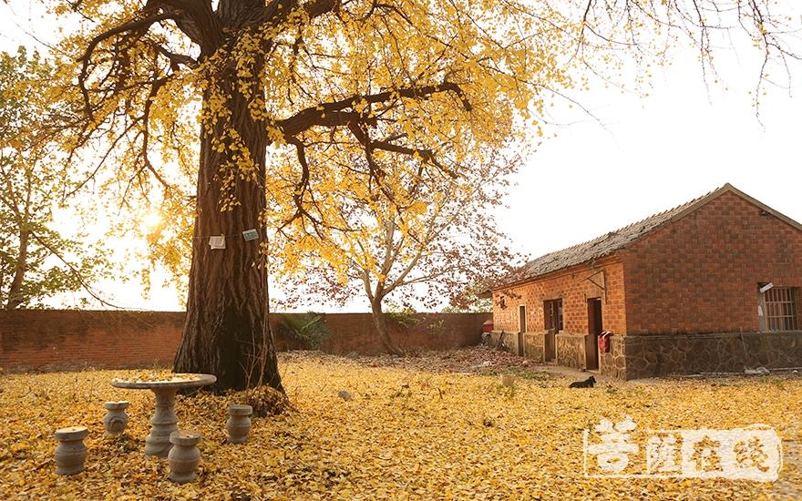 普光寺遗址是南京市江宁区二级文物保护单位(图片来源:菩萨在线 摄影:果仁)