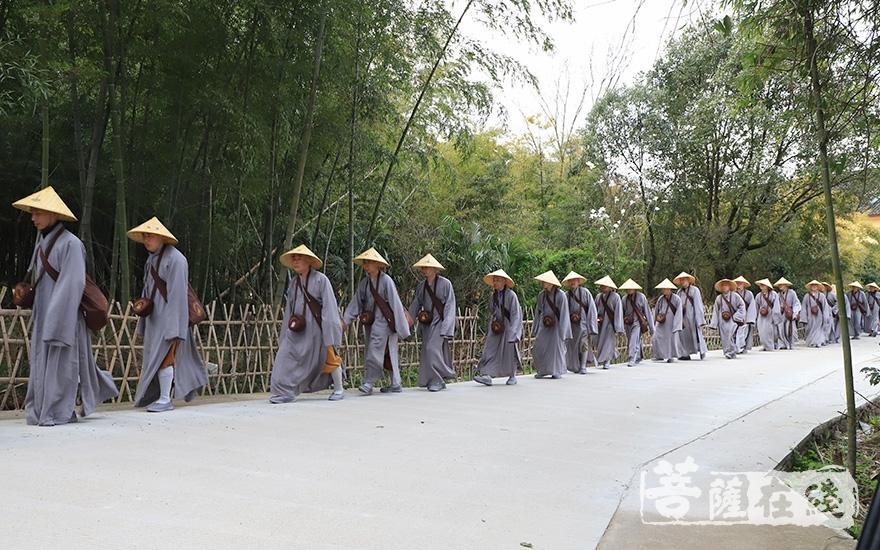 僧团清净和合(图片来源:菩萨在线 摄影:果仁)