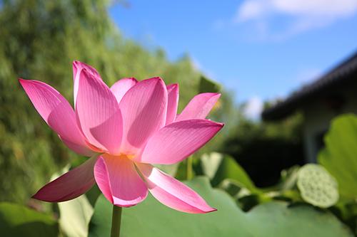比丘因色身的爱缚未能得道,尊者以神通力使其开悟