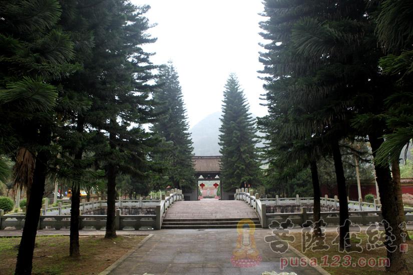林木葱郁(图片来源:菩萨在线 摄影:妙梵)