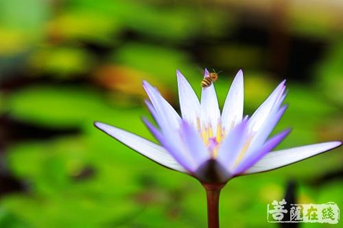 孙晓磊:心有莲花 与佛结缘
