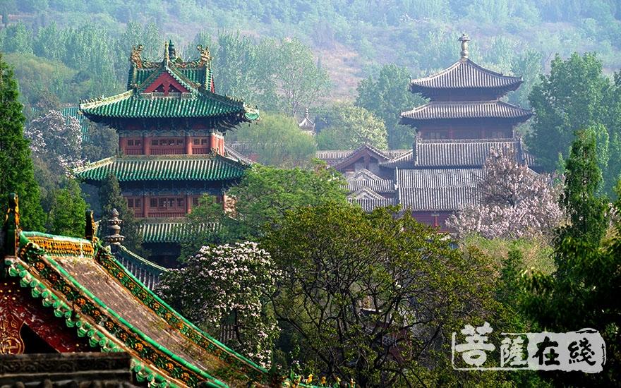 少林禅文化已经成为中华文化宝库中的瑰宝(图片来源:菩萨在线 摄影:卢鹏宇)