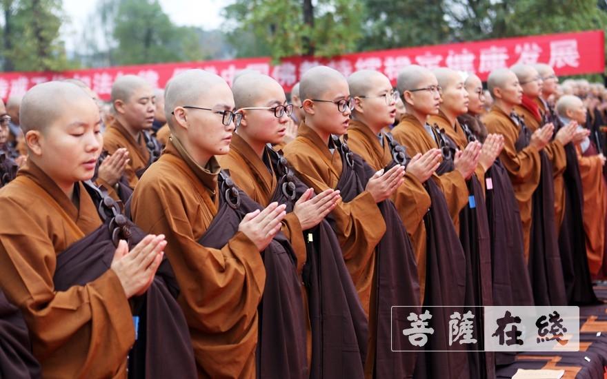 双手合十(图片来源:菩萨在线 摄影:李蕴雨)