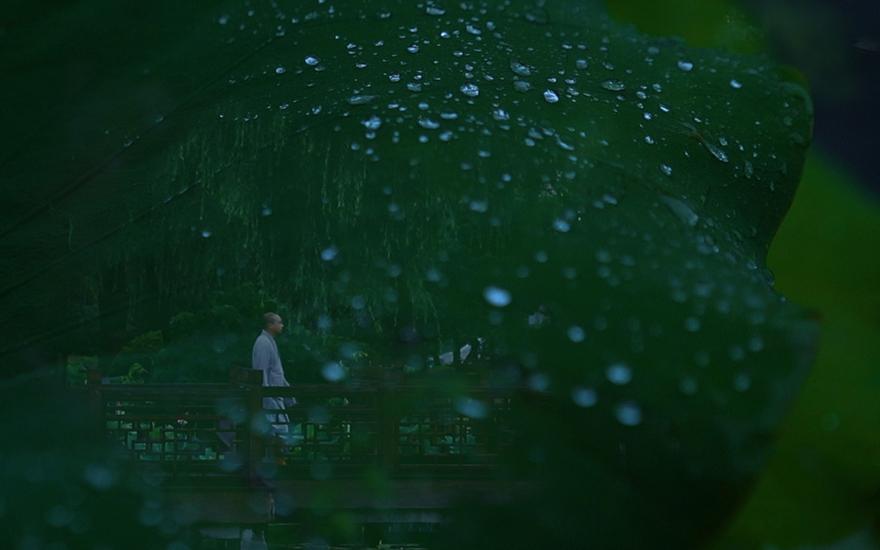 """视频丨寺内方寸 皆是清净——探寻""""魔都""""的烟雨江南"""